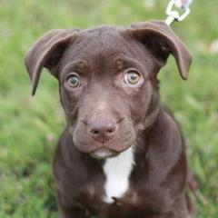 FINAL UPDATE: Dogs Scheduled for Euthanasia - do you have space to ... Chihuahua X Pitbull